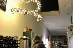 hang-met-katten